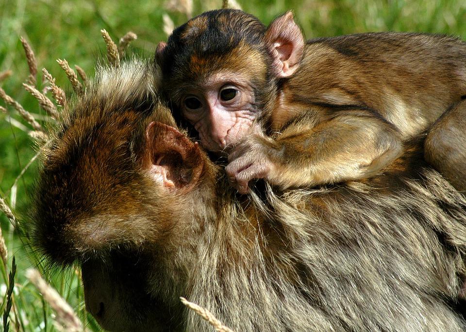 monkey-1337384_960_720
